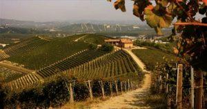 Barolo red wine Piedmont vineyards Nebbiolo